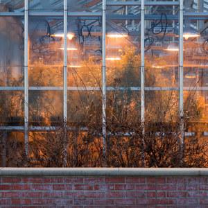 Greenhouse © Eddee Daniel