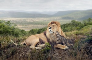 'Big Cat, Little Cat' is an advertising campaign for Whiskas cat food © George Logan, UK. Shortlist, Campaign, Professional Competition. 2014 Sony World Photography Awards