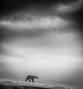 This is a series of images in black & white taken at Svalbard © Wilfred Berthelsen, Norway. Finalist, Travel, Professional competition. 2014 Sony World Photography Awards