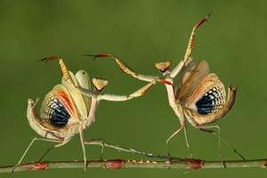 That's Dance, Sunward and Zeybeks © Hasan Baglar, Cyprus. Shortlist, Nature & Wildlife, Open Competition. 2014 Sony World Photography Awards