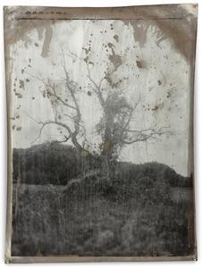 Special Project 30, 2010, Silver Gelatin Print, 81 x 61 cm © Jeff Cowen