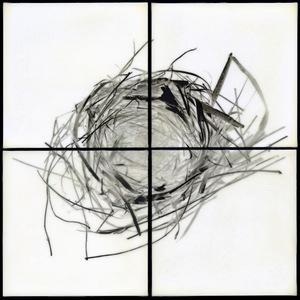 """Nest VI, 2011                                              32""""h x 32""""w x 1.5""""d                                         archival pigment prints & encaustic on panels                                                    © Christa Bowden"""
