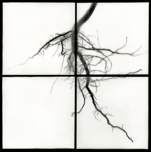 "Root I, 2009                                              32""h x 32""w x 1.5""d                                         archival pigment prints & encaustic on panels  © Christa Bowden"