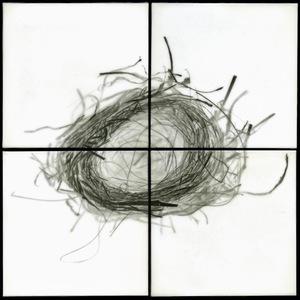 """Nest IX, 2012                                              32""""h x 32""""w x 1.5""""d                                         archival pigment prints & encaustic on panels                                                    © Christa Bowden"""