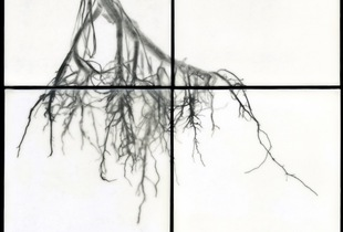 "Root III, 2011                                              32""h x 32""w x 1.5""d                                         archival pigment prints & encaustic on panels  © Christa Bowden"