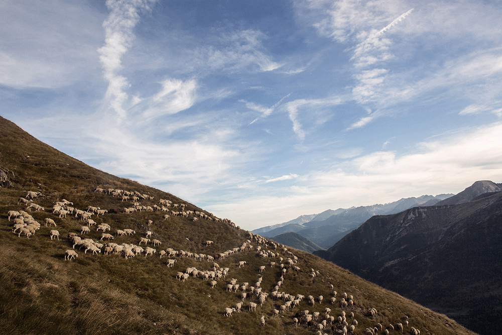 A group of sheep in the Salau mountains, in the Catalan Pyrenees.