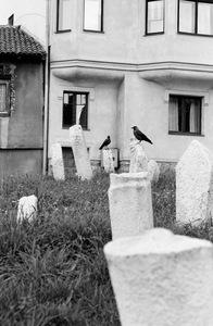 Birds © Velibor Bozovic