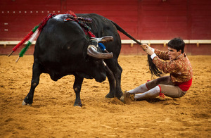 João Madeira, a member of the Forcados group of Évora, acts as the 'rabujador' pulling the tail and riding in circles with the bull. This is the third and final part of the forcados performance. © Eduardo Leal
