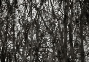 Riverbank Wood   © Shaun OBoyle