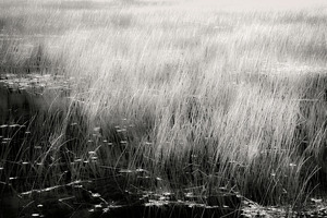 The Tarn 8, © Alan Henriksen