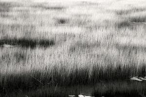 The Tarn 11, © Alan Henriksen