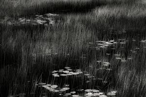 The Tarn 12, © Alan Henriksen