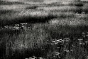 The Tarn 13, © Alan Henriksen