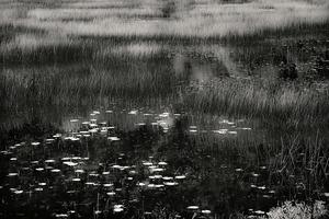 The Tarn 20, © Alan Henriksen