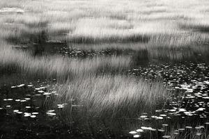 The Tarn 22, © Alan Henriksen