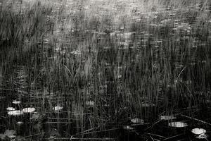 The Tarn 40, © Alan Henriksen