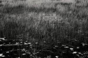 The Tarn 41, © Alan Henriksen