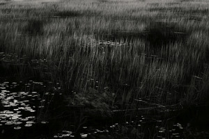 The Tarn 43, © Alan Henriksen