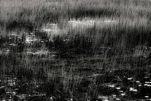 The Tarn 45, © Alan Henriksen