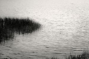 Upper Hadlock Pond 2, © Alan Henriksen