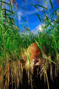 Reeds, 2011 © Anni Kinnunen