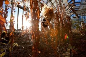 Darwin's Garden, 2010 © Anni Kinnunen