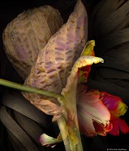 Hosta and Tulip © 2014 Kim Kauffman