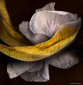 Orchids and Banana Leaf © 2014 Kim Kauffman