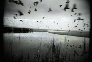 Bird.v.2, Aptos Creek, CA