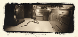 Digestion after strangulation, the feeding of Lauren's python, Santa Cruz, CA, 1997. © Chris McCaw