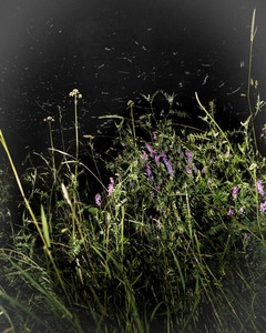 Boreas Wildflowers                    © Paul Thulin