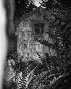 Shack of Ryhope Wood            © Paul Thulin
