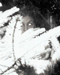 Silvered Eye                                 © Paul Thulin
