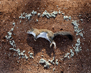Squirrel 1 from the series At Rest © Emma Kisiel