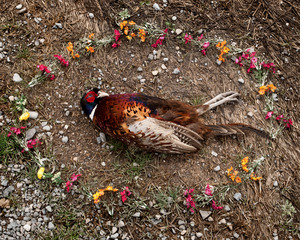 Pheasant from the series At Rest © Emma Kisiel