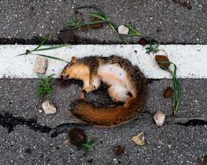 Squirrel 2 from the series At Rest © Emma Kisiel