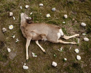 Deer 2 from the series At Rest © Emma Kisiel