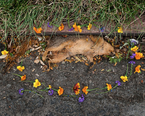 Squirrel 3 from the series At Rest © Emma Kisiel