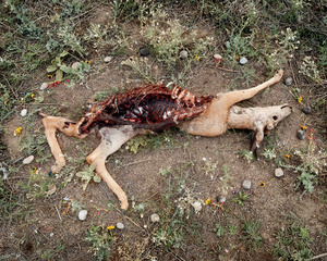Deer 4 from the series At Rest © Emma Kisiel