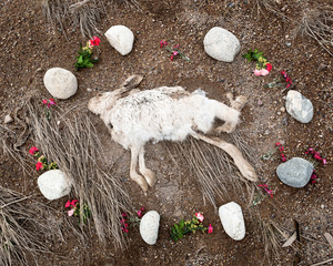 Rabbit from the series At Rest © Emma Kisiel